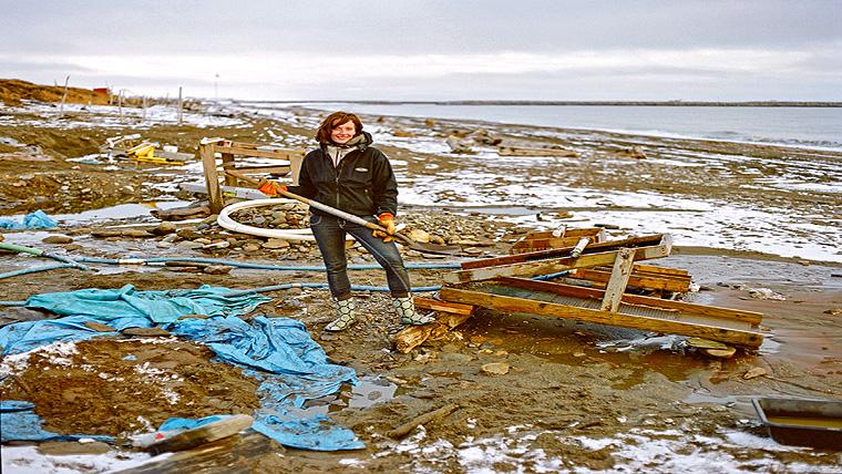 Goldtaucher Der Beringsee